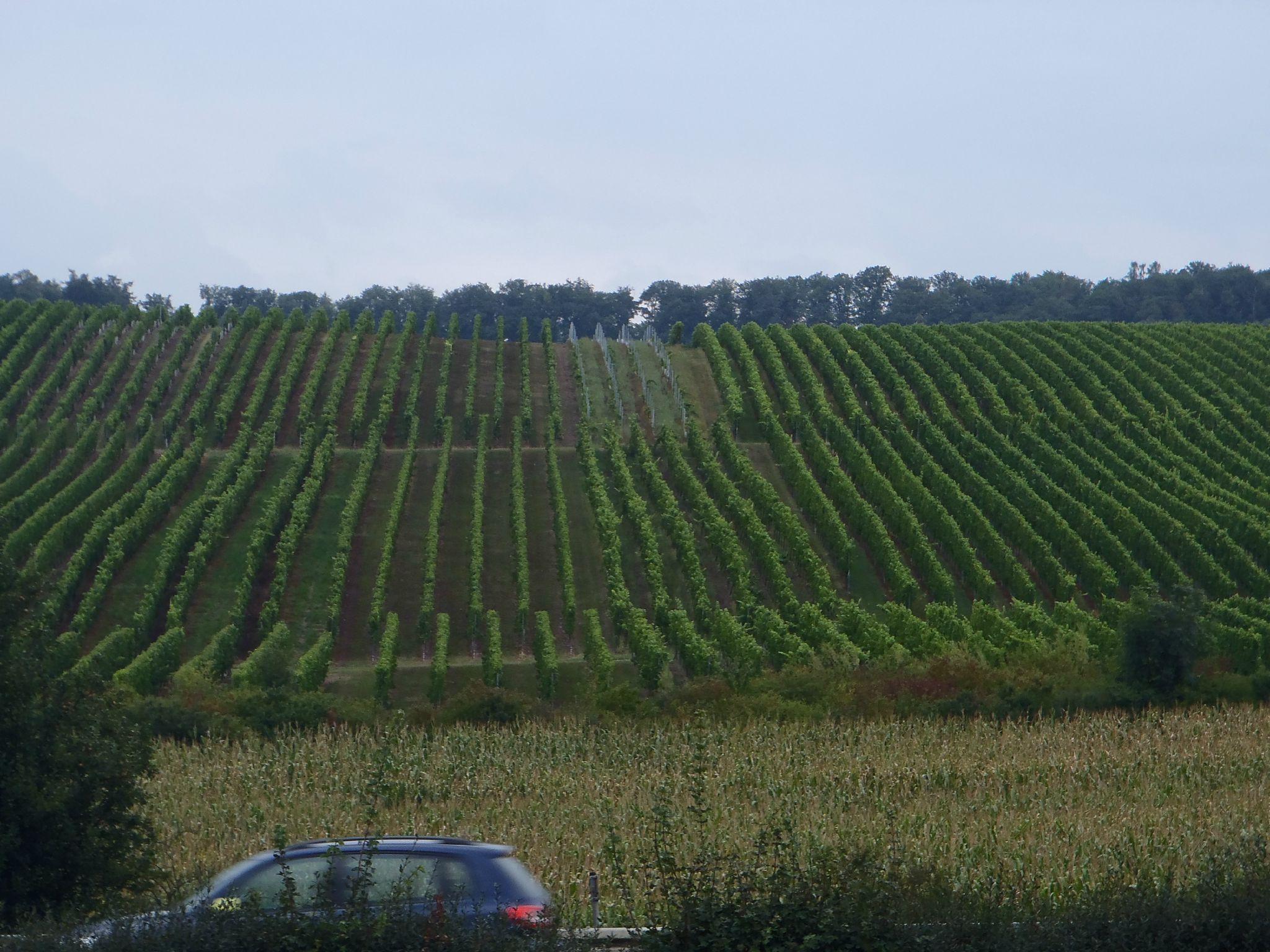 les vignes en allemagne