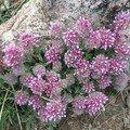Fleur de printemps 3