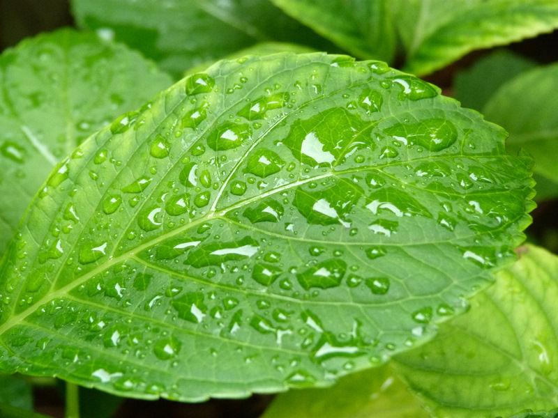 De la pluie en juin