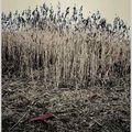 Plastic fields - sosnowiec