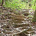 Kourou - Montagne des singes
