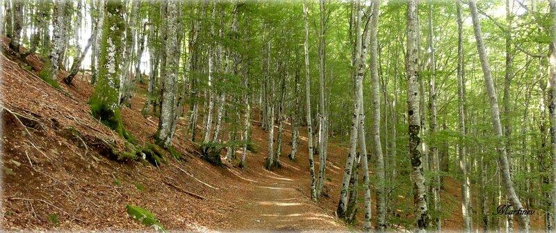 01 08 018 Forêt en Aveyron (2)-001