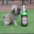 A boire...!!!