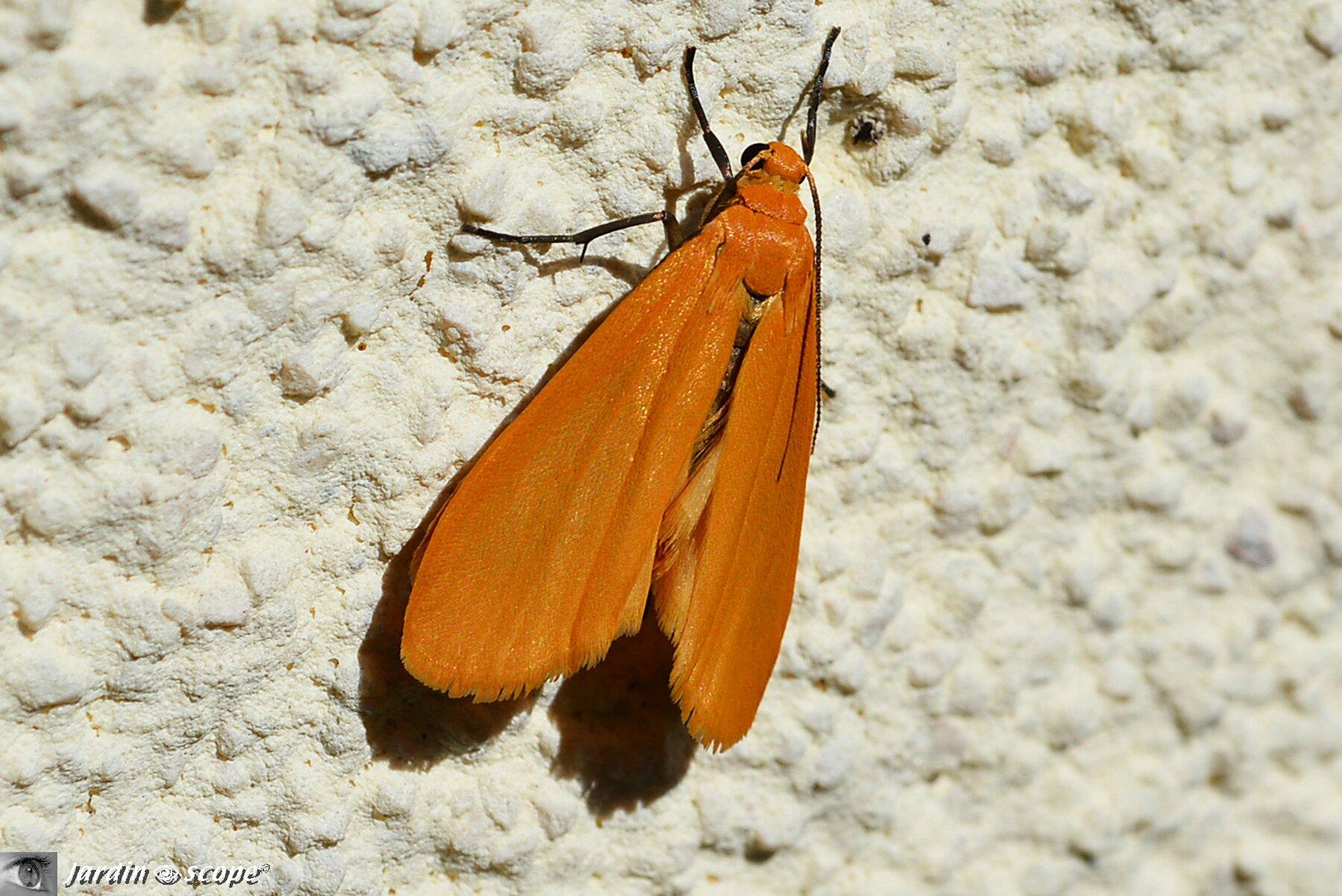 Ce papillon de nuit am liore son bronzage au soleil d 39 avril le jardinoscope toute la vie - Duree de vie papillon de nuit ...
