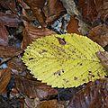 Une nuance de jaune