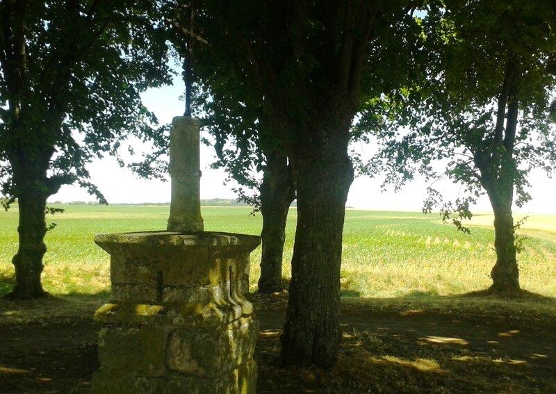 Bosquet au mileu de champs de blé