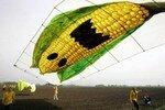 OGM_manif_greenpeace_Allemagne
