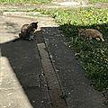 Titoune et Domino dans la cour commune