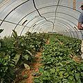 garéoult légumes bio var paca ruiz (25)