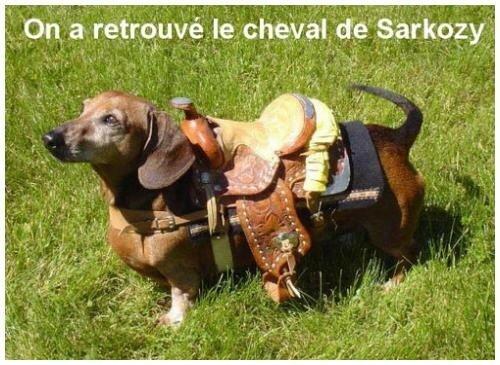 chien_de_sarkozy