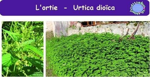 ortie-photoblog