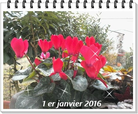 IMG_20160101_095043