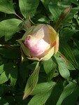 jardin_en_avril_031