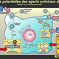 Futurs traitements de l'hépatite c chronique