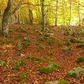 2008 10 12 Des pierres et des feuilles morte dans la forêt du Meygal