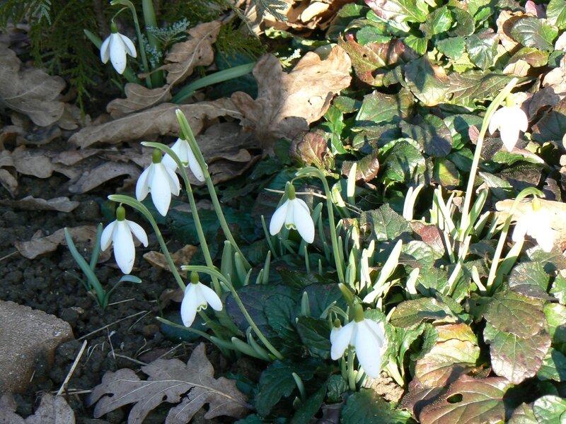 fleurs fevrier 2013 001