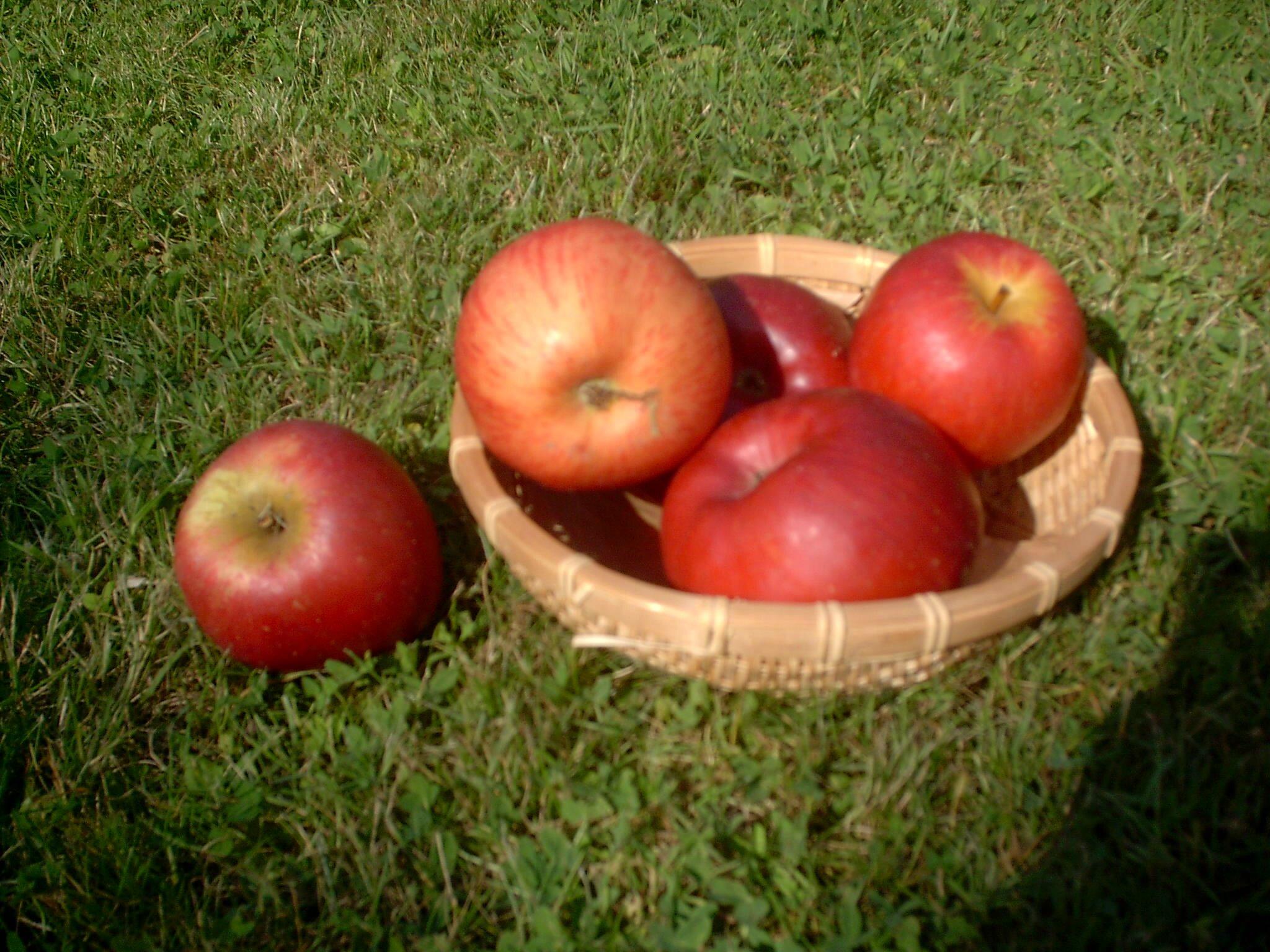 EFT en croquant la pomme ! EFT contre l'allergie aux fruits!