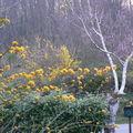 bouquet de jaune