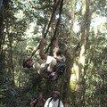 Cameron Highlands, trek, Stan sur une liane