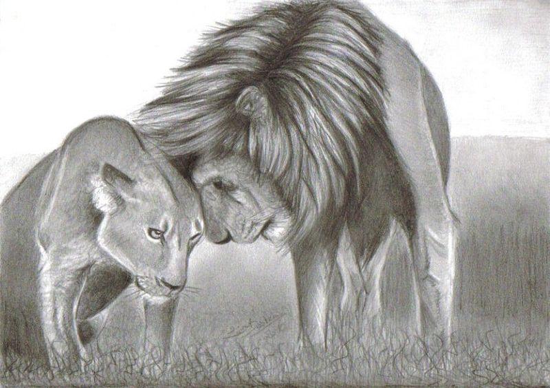 Mes dessins - Lionne dessin ...