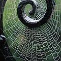 incroyable araignée