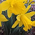 Quelques fleurs dans mon jardin...