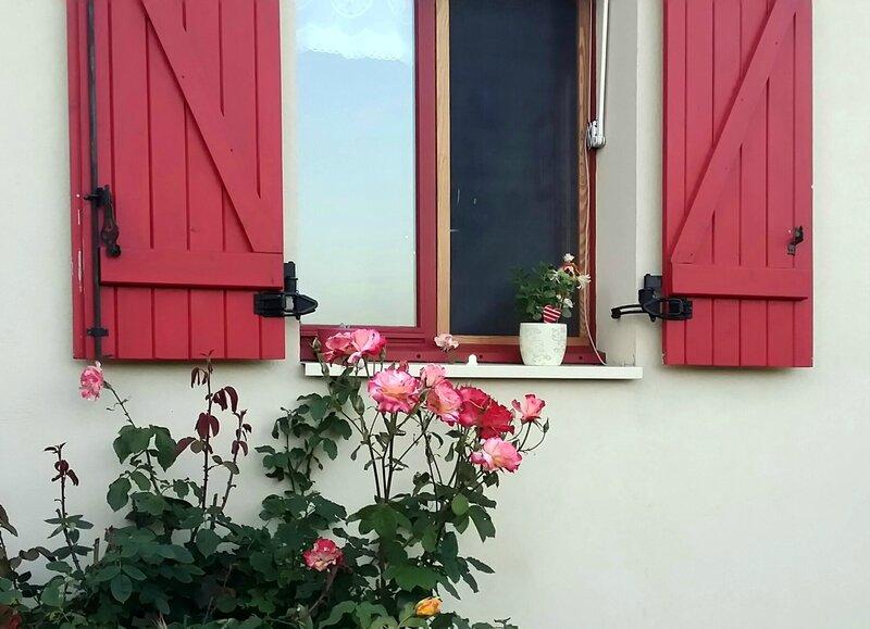 16 07 09 Roses sous fenetre cuisine 21h57
