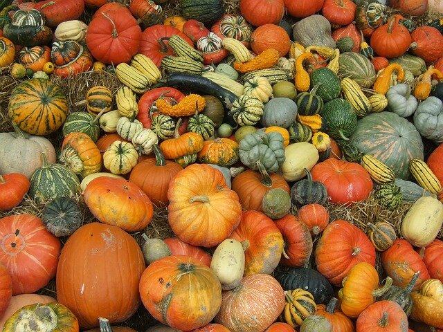 pumpkin-8544_640
