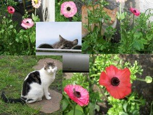 cats_n_flowers