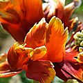 Photographie de fleurs au jardin des plantes de nantes le 6 mai 2016 (3)