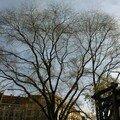 14 Strasbourg vu par mon télephone