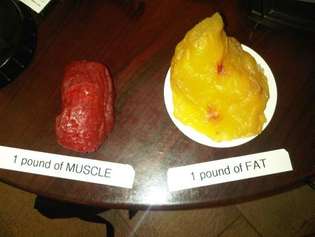 muscle-v-fat