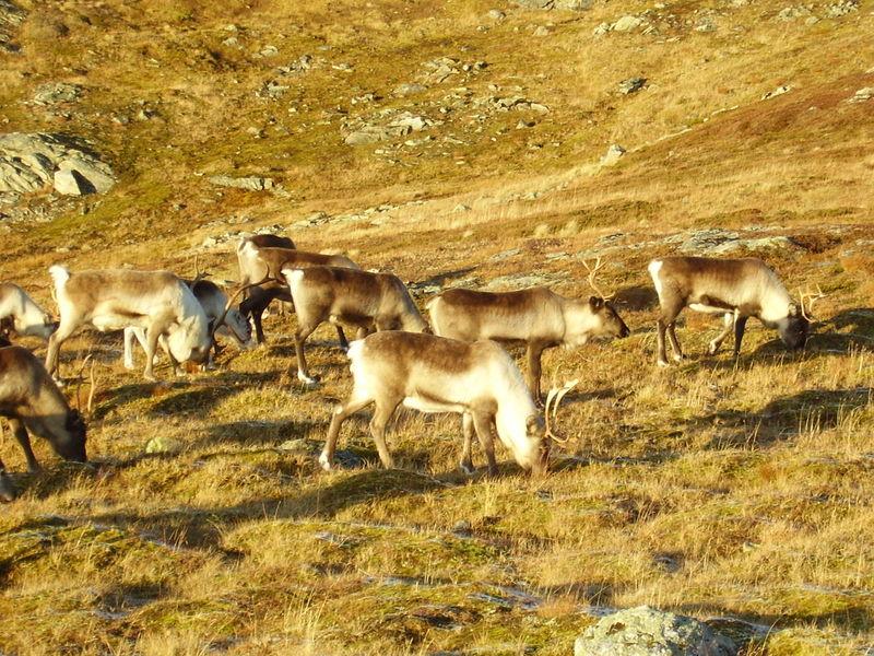 17-10-08 Sortie Montagne et rennes (120)