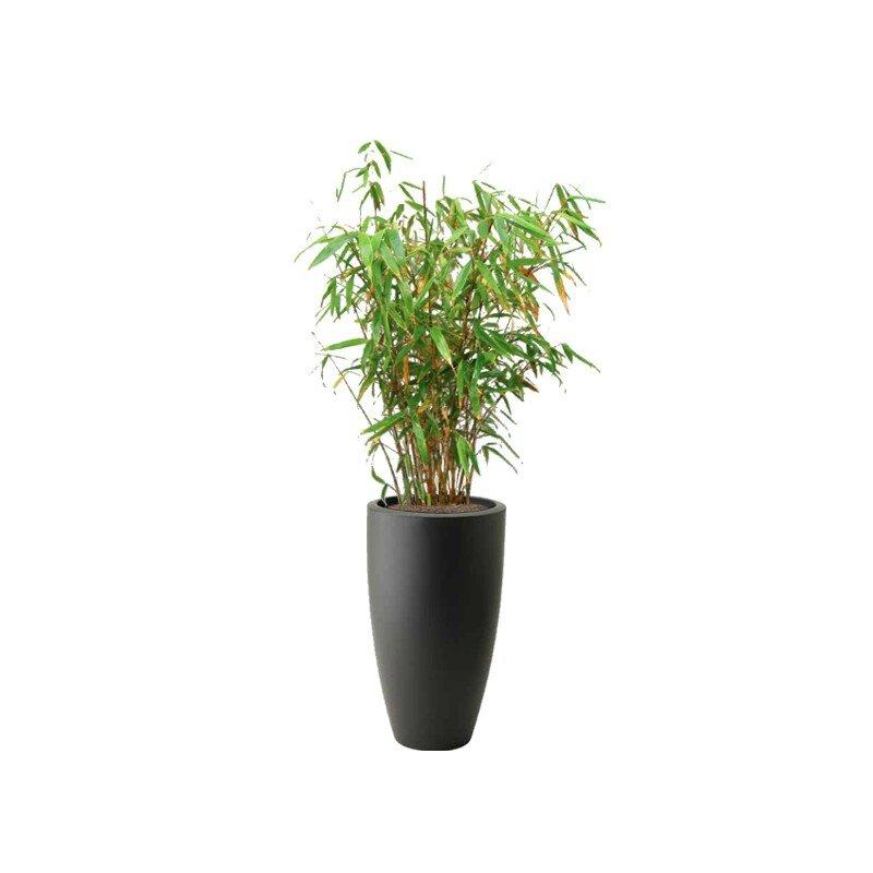 bambou-panda-pot-haut-arrondi