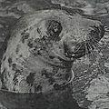 Il y a 60 ans, bobby le phoque rejoignait le jardin botanique de tours