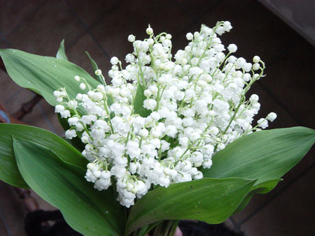 muguet_2