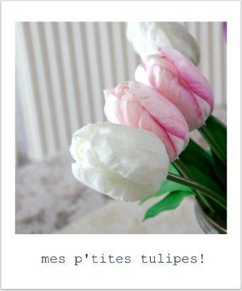 mes_p_tites_tulipes_