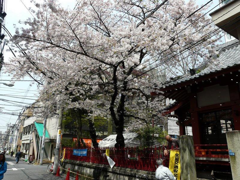 Canalblog Tokyo Cerisier 2010 Asakusa01