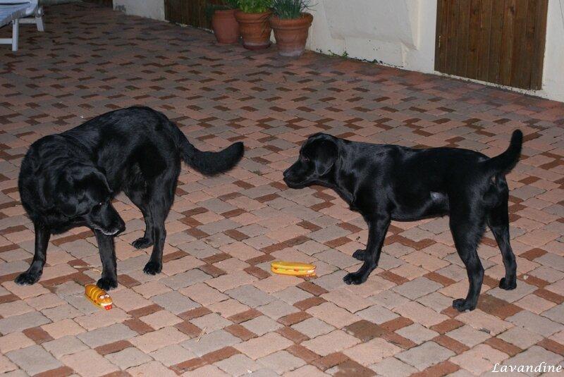 chiens 07 2008 (30)