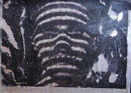 277 - Zebra man