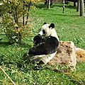 Zoo parc de beauval (loir-et-cher) - quelques photos... 1/3
