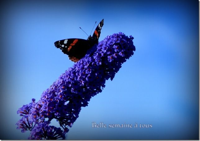 VENDEE PAPILLONS 2012 207