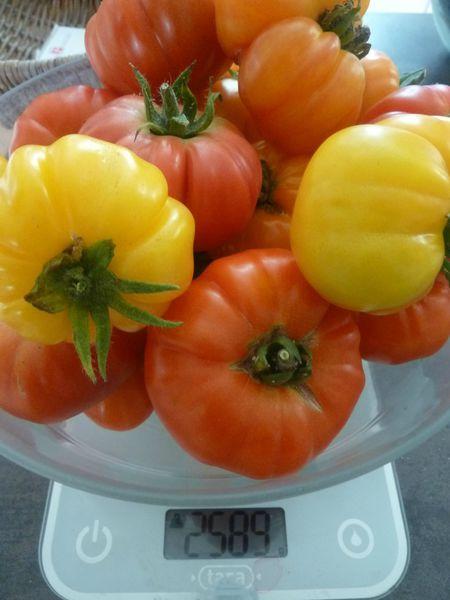 11-tomates du jour (11)