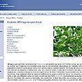 Nouveau profil de substance de l'oedt : le kratom