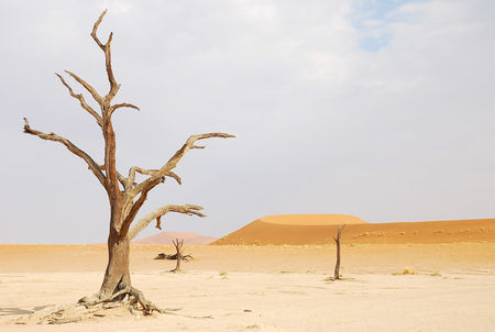 Dead_Vlei__parc_du_Namib_Naukluft__Namibie__5_