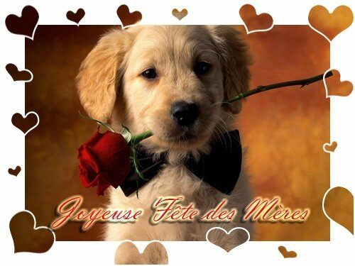 fete-meres-chien-mere-rose-img