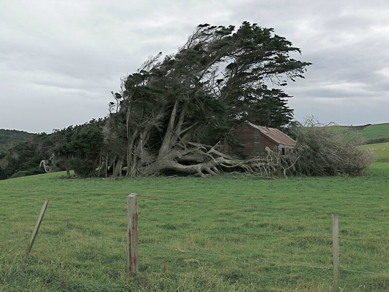 twisted-trees-slope-point-new-zealand-south-island-10