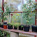 Jardin belle vue, beaumont-le-hareng