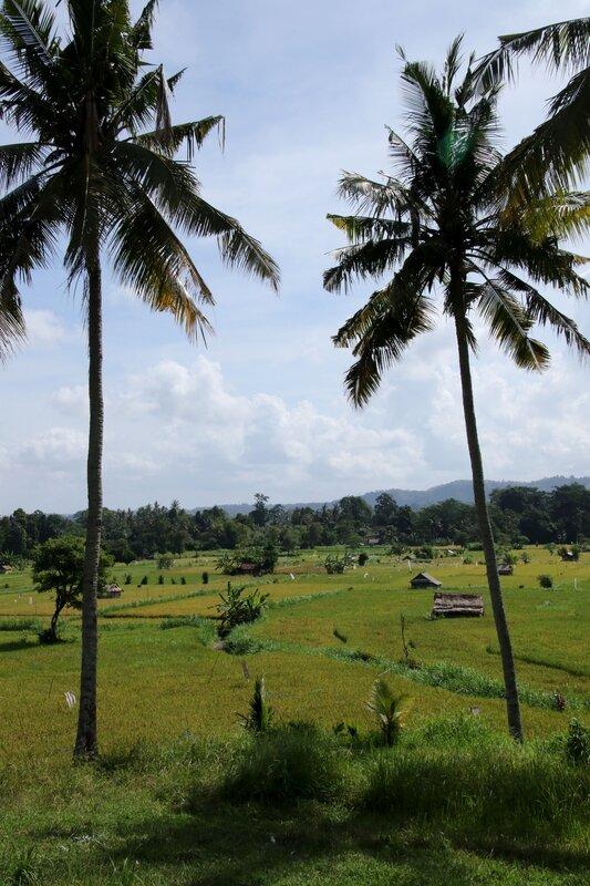 Bali 125