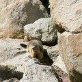 Marmotte Estaragne 1